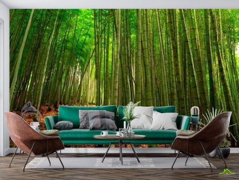 Фотообои Природа по выгодной цене Фотообои Бамбук, тропинка