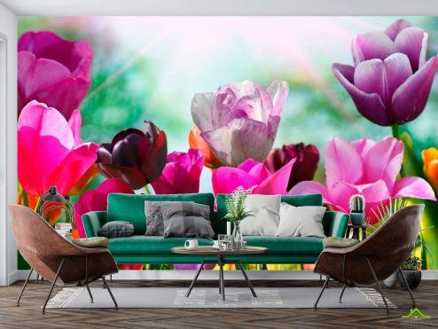 Тюльпаны Фотообои Тюльпаны редких цветов купить