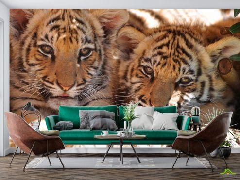 Тигры Фотообои Тигрята  купить