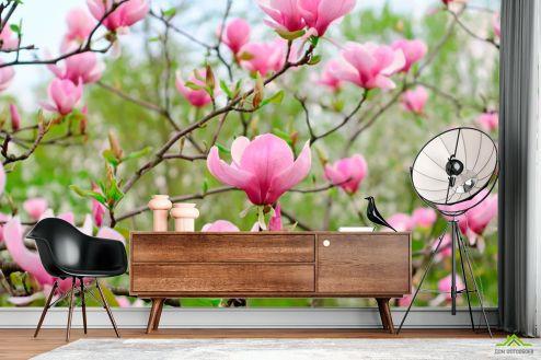 Кипарис Фотообои Бледно-розовый кипарис