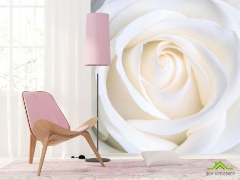 обои Цветы Фотообои Бутон белоснежный