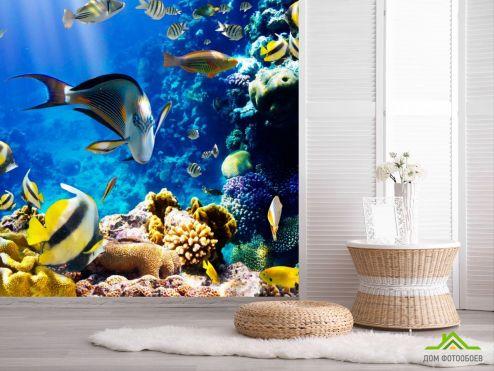 обои Рыбы и море Фотообои Косяк рыб
