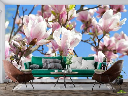 Фотообои Кипарис по выгодной цене Фотообои Цветущий кипарис розовый