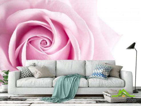 обои Цветы Фотообои Розовый бутон розы