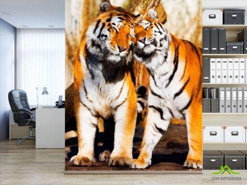 Тигры Фотообои Любовь тигров