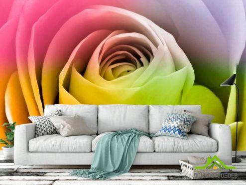 обои Цветы Фотообои Пионы