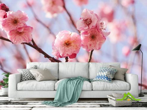 Вишня Фотообои Розовые вишневые соцветия