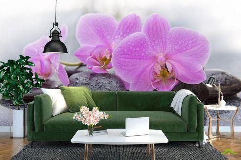 Орхидеи Фотообои камни и орхидеи