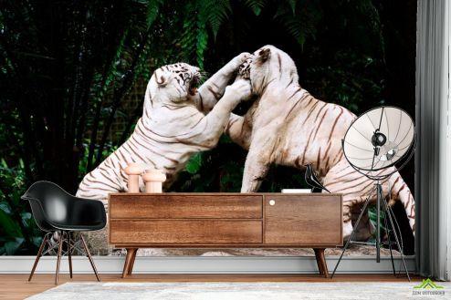 Тигры Фотообои Драка белых тигров