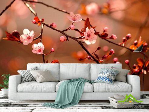обои Цветы Фотообои Дерево вишни цветет