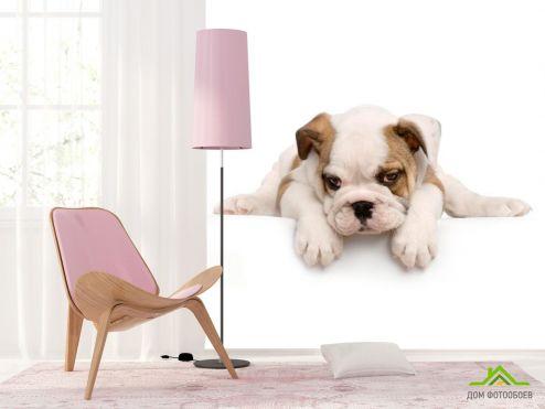 обои Собаки Фотообои Щенок