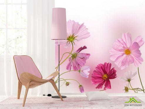 Ромашки Фотообои Ромашки розовые и малиновые