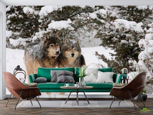 Волки Фотообои Волки в снегу