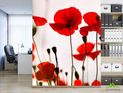Маки Фотообои Маки полевые красные