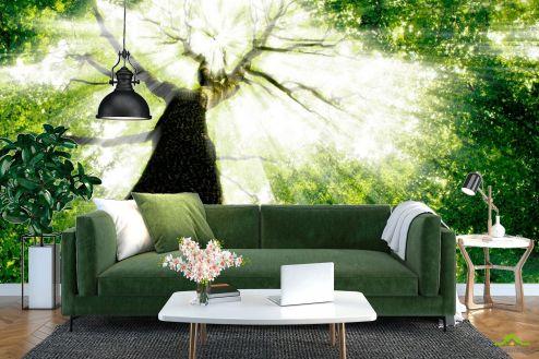 лес Фотообои Дерево, свет