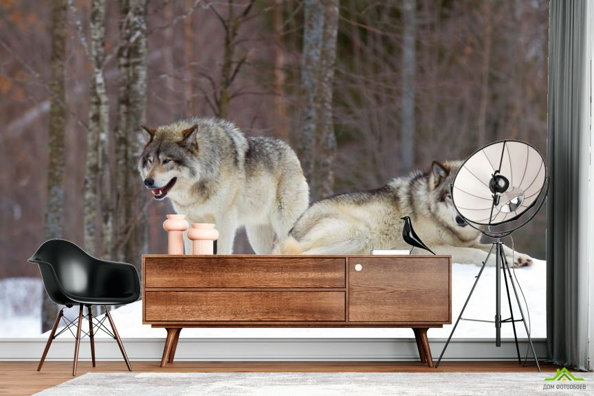 Фотообои два волка на снегу
