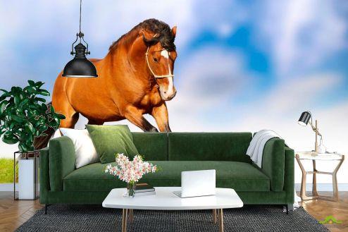 Лошади Фотообои Гарцующий конь