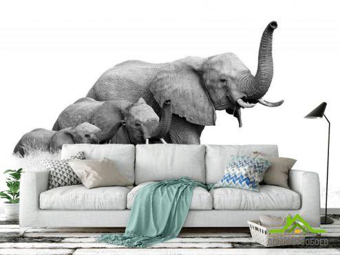 Черно-белые обои Фотообои  слоны