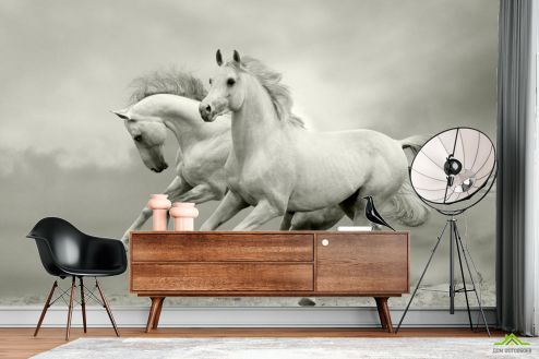 Лошади Фотообои Белоснежные скакуны