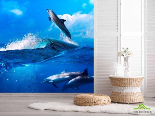 обои Животные Фотообои Дельфины на волнах