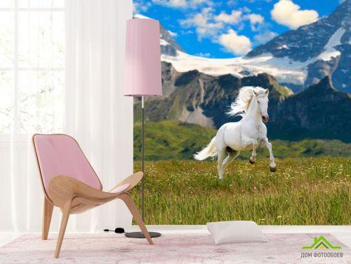 Лошади Фотообои Конь в поле