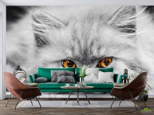 Животные Фотообои Серый котенок