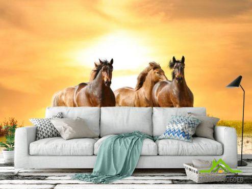 обои Лошади Фотообои Мустанги на прогулке