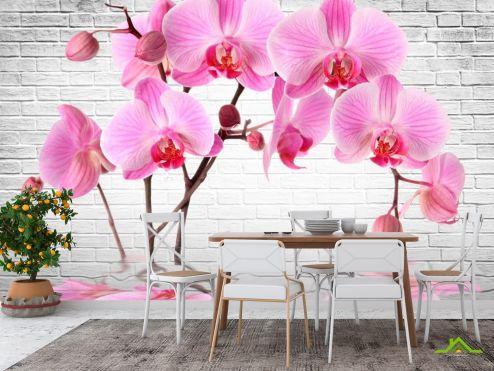 Розовые  Фотообои в кухню Орхидеи