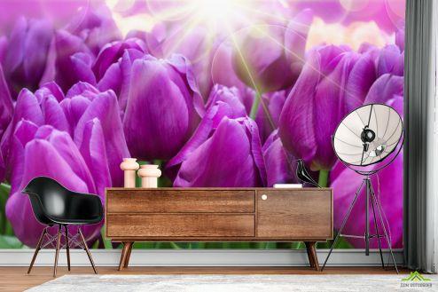 Тюльпаны Фотообои фиолетовые тюльпаны