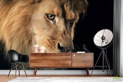 Животные Фотообои морда льва