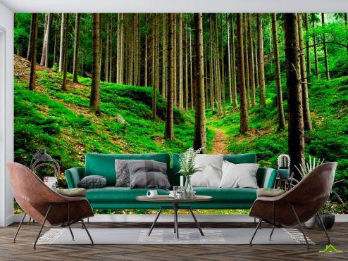 Фотообои Природа по выгодной цене Фотообои Тропинки, ёлки