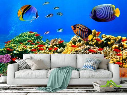 обои Рыбы и море Фотообои Рыбки на дне морском