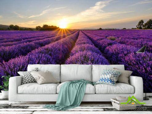 Фотообои разные по выгодной цене Фотообои цветы в поле