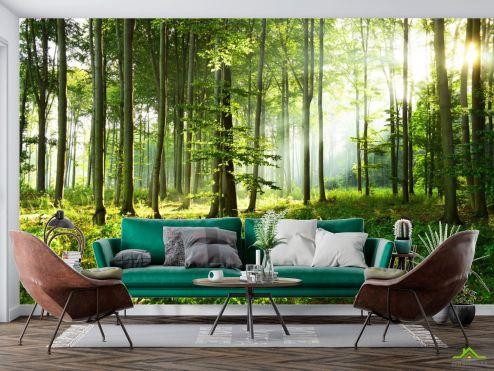 Фотообои Природа по выгодной цене Фотообои Зелёные деревья