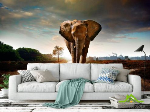 Слоны Фотообои Слон на дороге