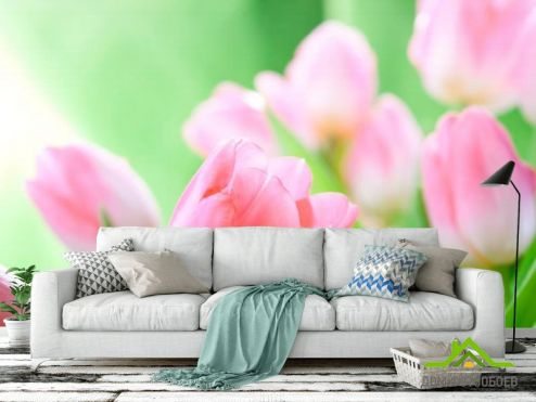 обои Цветы Фотообои Нежно-розовые тюльпаны