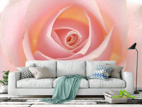 обои Цветы Фотообои Розочка кремовая