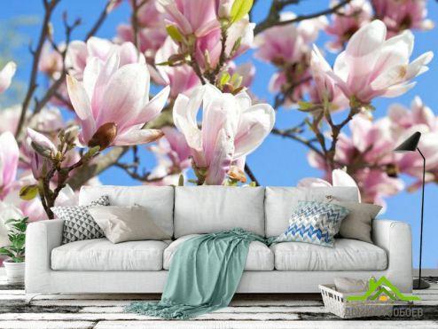 Кипарис Фотообои Цветущий кипарис розовый