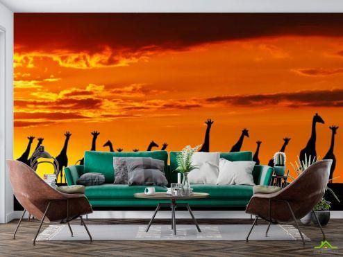 Природа Фотообои много жирафов и закат