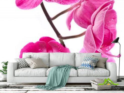 обои Орхидеи Фотообои Ветка орхидей малиновых