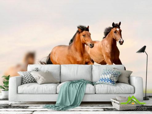 Лошади Фотообои Скачущие кони