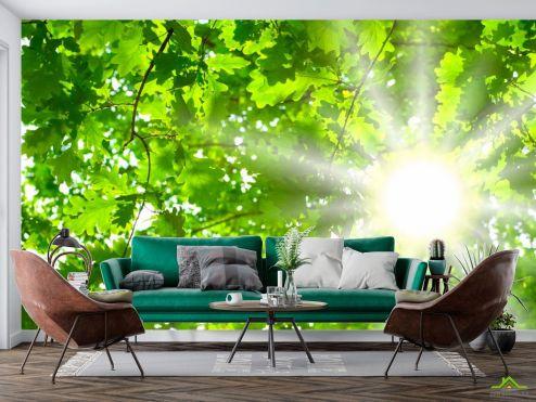 Фотообои Природа по выгодной цене Фотообои Дубовый лист
