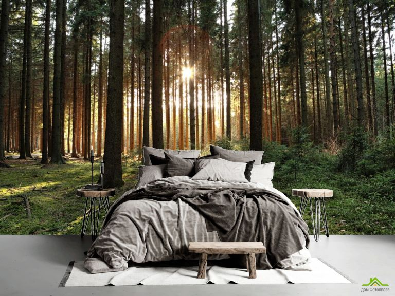 Фотообои солнце пробивается в лесу