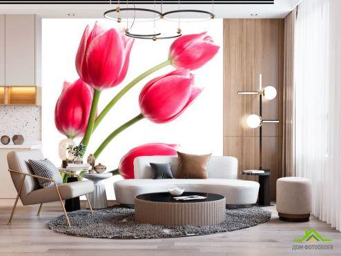 Тюльпаны Фотообои Тюльпаны розовые купить