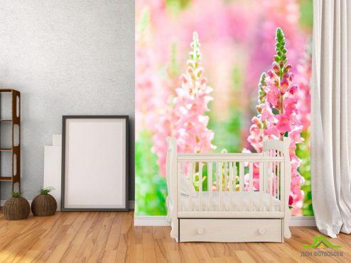 Лаванда Фотообои Розовая лаванда