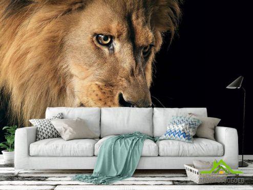 обои Животные Фотообои морда льва