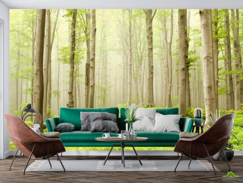 Природа Фотообои Голые деревья