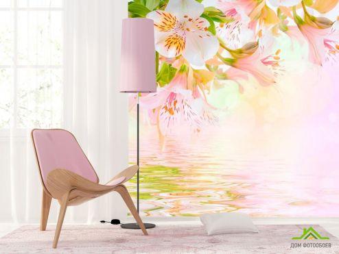 обои Цветы Фотообои Лилии над водой