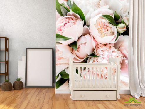 Фотообои Цветы по выгодной цене Фотообои Пионы персиковые