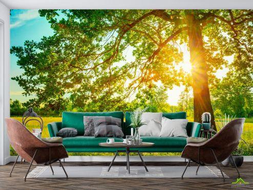 Фотообои Природа по выгодной цене Фотообои солнце из-за дерева